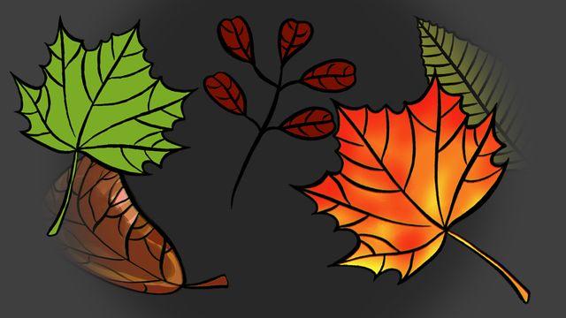 Pourquoi les feuilles tombent-elles des arbres? [RTS]