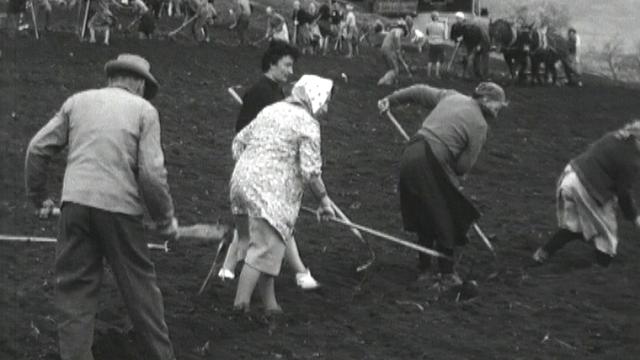 Labours communautaires au Levron en Valais en 1964. [RTS]