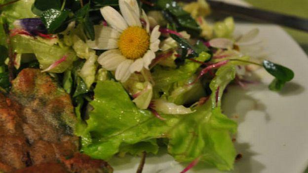 Manger des plantes sauvages