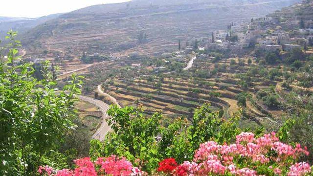 En Palestine, le paysage culturel du sud de Jérusalem, un pays d'olives et de vignes cultivées en terrasse, a été inscrit sur la liste du patrimoine en péril. [© Jasmine Salachas/Centre for Cultural Heritage Preservation]