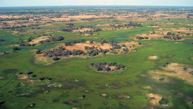 Le delta de l'Okavango, au Botswana, est inscrit au patrimoine naturel. Une de ses caractéristiques est que les crues annuelles se produisent en saison sèche, de sorte que les plantes et les animaux ont synchronisé leur rythme biologique avec les crues et les pluies annuelles. [© Joyce Bestelink, Okavango aerial]
