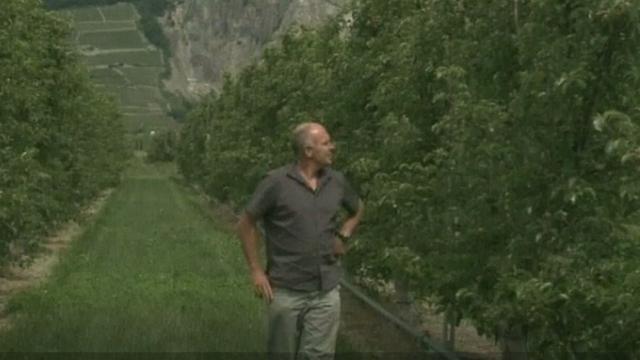 Verger dans la plaine du Rhône en 2010 [RTS]