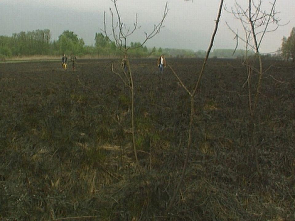 Incendie à la réserve naturelle des Grangettes en 1992. [TSR]