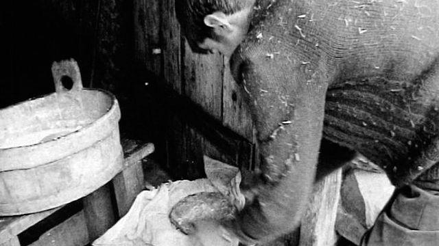 Fromager sur l'alpage en 1965. [RTS]