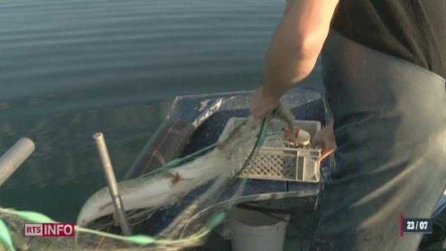 Les gardes-pêche français ont saisi 16 nasses hors la loi lors d'un contrôle dans les eaux du Léman [RTS]