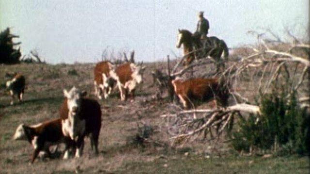 Leur vie dans le Far West se passe entre action et contemplation ! [RTS]