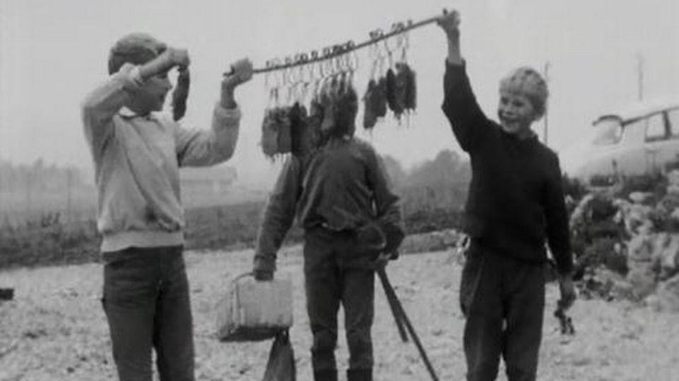 A Bassecourt, la chasse aux mulots est organisée avec soin. [RTS]