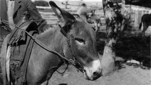 Problème de mathématiques d'août 2014 - RTSDécouverte [California Historical Society Collection, 1860-1960 - University of Southern California (Domaine public)]