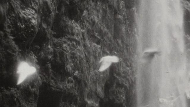 Vol d'oiseaux dans les gorges du Taubenloch. [RTS]