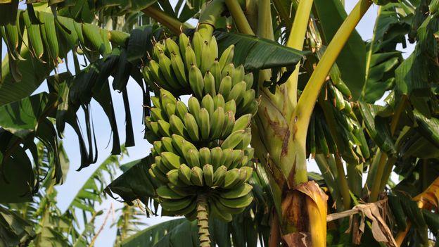 Les OGM sont-ils justifiés pour lutter contre la faim?
