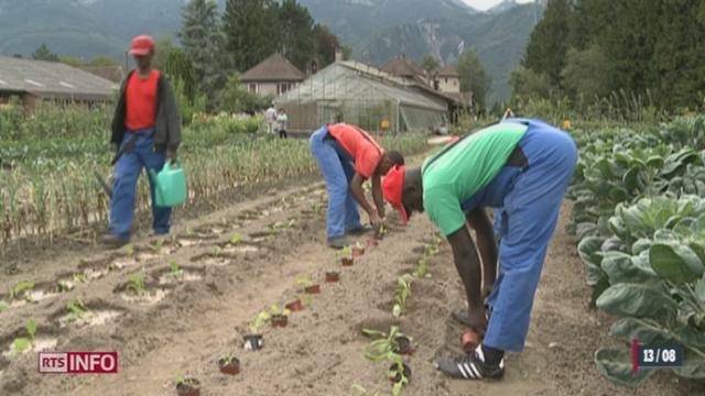 L'agriculture suisse craint de manquer de main-d'œuvre [RTS]