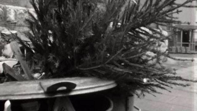 Que devons-nous faire des sapins de Noël après les fêtes? [RTS]