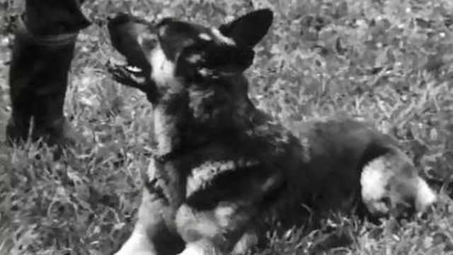 La police fribourgeoise entraîne ses chiens policiers. [RTS]