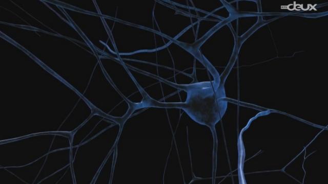 Un cerveau informatique [RTS]