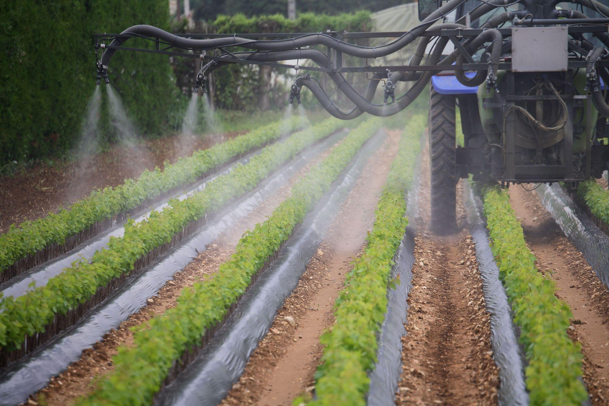pesticideAlgerie