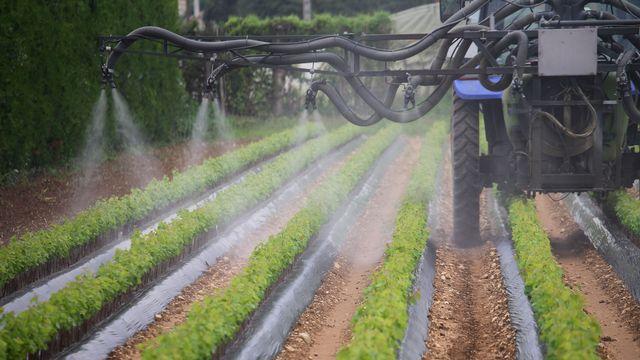 Un tracteur entrain d'arroser de pesticide de jeunes pousses. [Eric Guilloret - AFP]