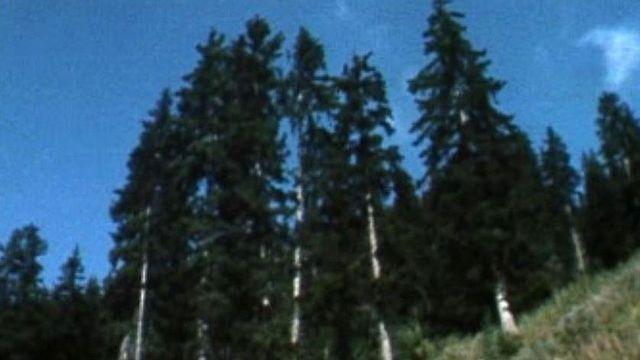 Le rythme de développement de la forêt se joue sur des décennies.