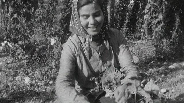 Cueillette du houblon en Valais en 1964. [RTS]