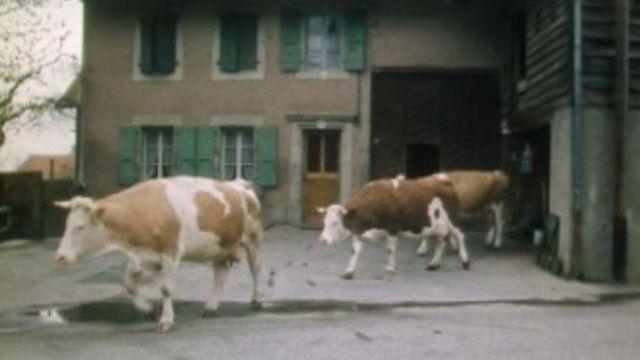 Au village de Cugy en 1978. [RTS]