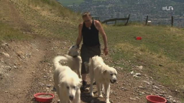 Des chiens pour protéger les moutons [RTS]