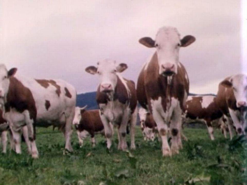 La politique fédérale change les habitudes des producteurs de lait. [RTS]