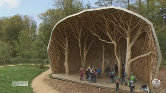 Minimag: le bois de Moncor, à Villars-sur-Glâne (FR), n'est pas une forêt comme les autres [RTS]