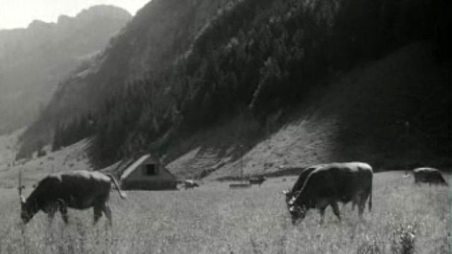 L'herbe des pâturages d'Appenzell est la meilleure du monde.