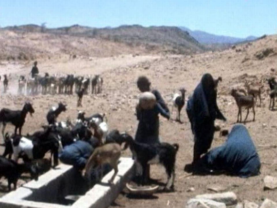 Enquête sur la politique américaine d'aide contre les famines.