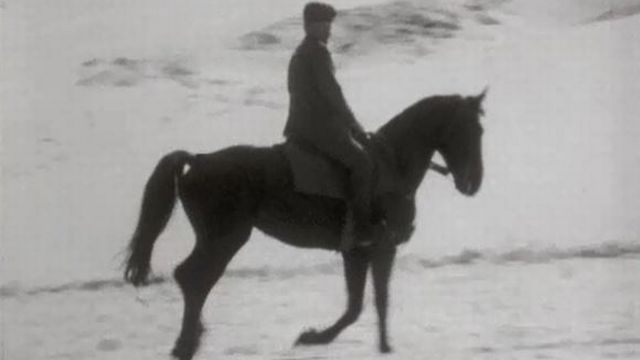 Sans la cavalerie militaire, le cheval risque de disparaître en Suisse. [RTS]