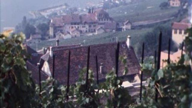 Portrait d'un village vigneron du Lavaux à l'heure des vendanges. [RTS]