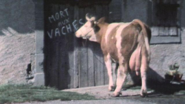 Le voyage d'une vache. [RTS]
