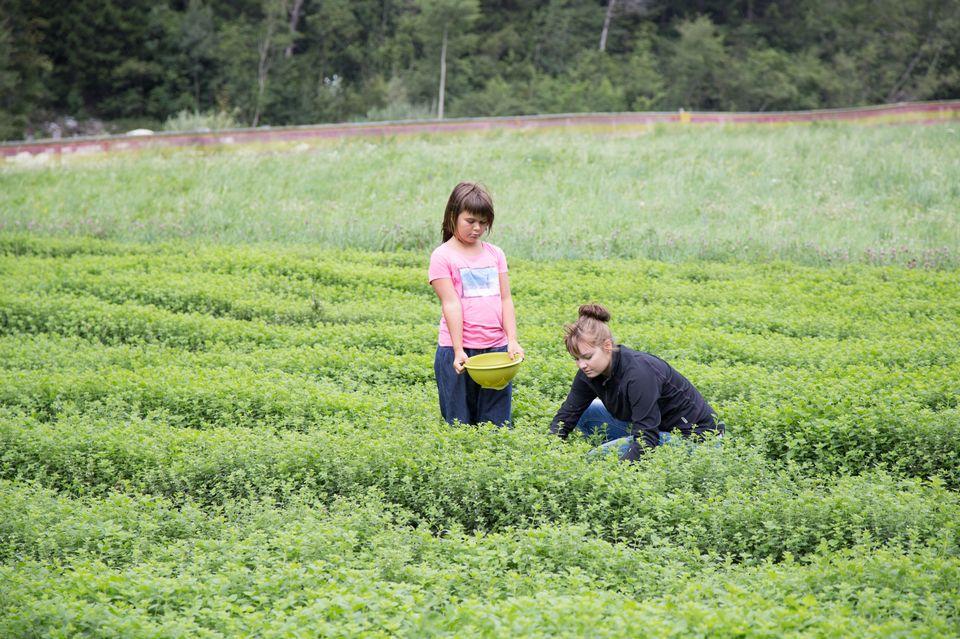 Thaïs, la fille de Patrick et Célia, l'une des trois filles de Magaly cueillent des plantes médicinales pour le repas et la décoration de la table. [Sébastien Foggiato - RTS]