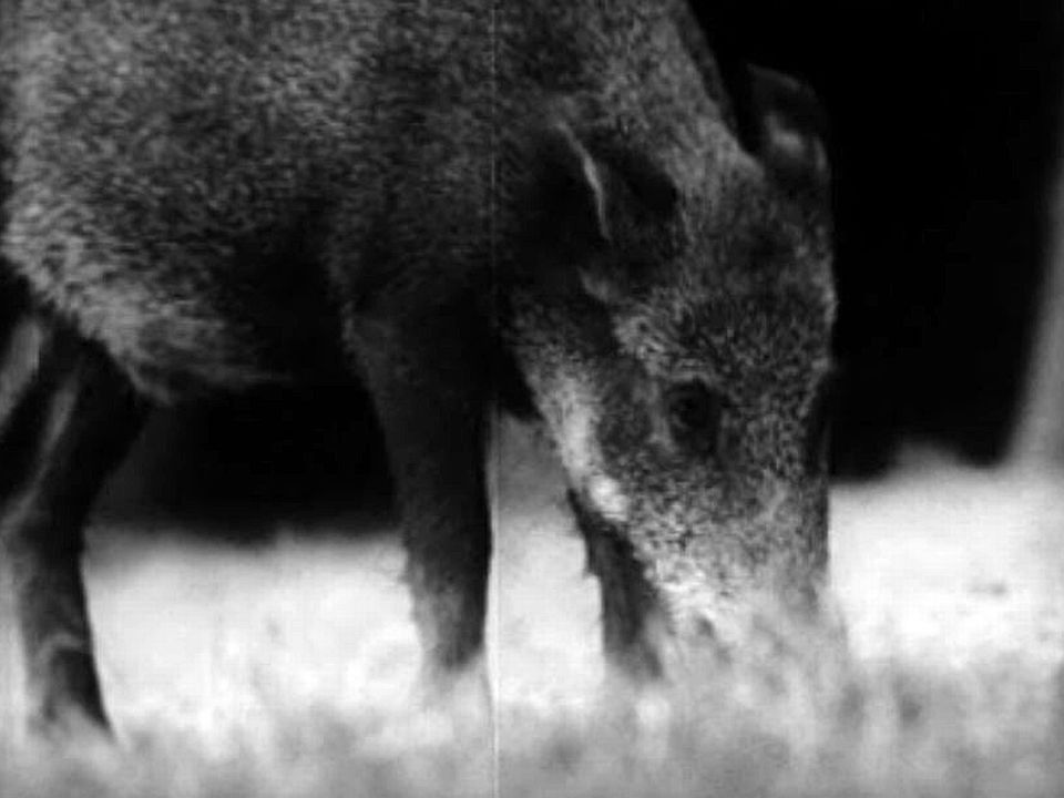 Sur les traces des animaux de nos forêts. Une émission pour les jeunes.