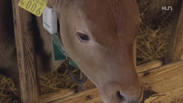 Antibiotiques pour animaux : on en paie le prix [RTS]