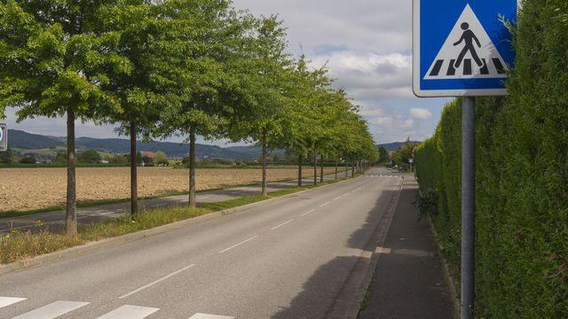 L'idée est de remplacer les panneaux publicitaires par des arbres. [© Denis Augustin - Fotolia]