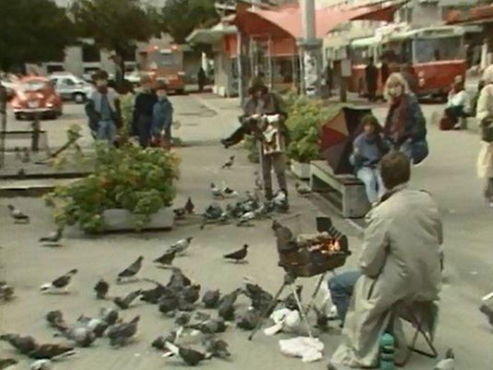 Les pigeons des villes sont bien meilleurs à la broche. [RTS]