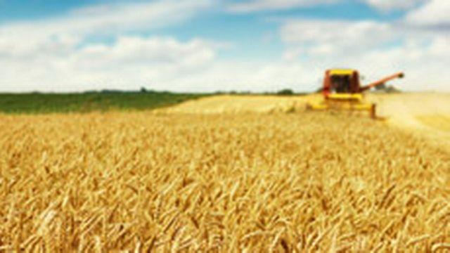 Agriculture [© Dickov - Fotolia]
