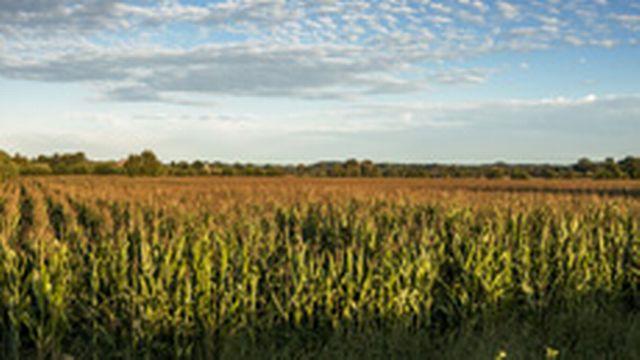 AgricultureOGM [© quaximo - Fotolia]