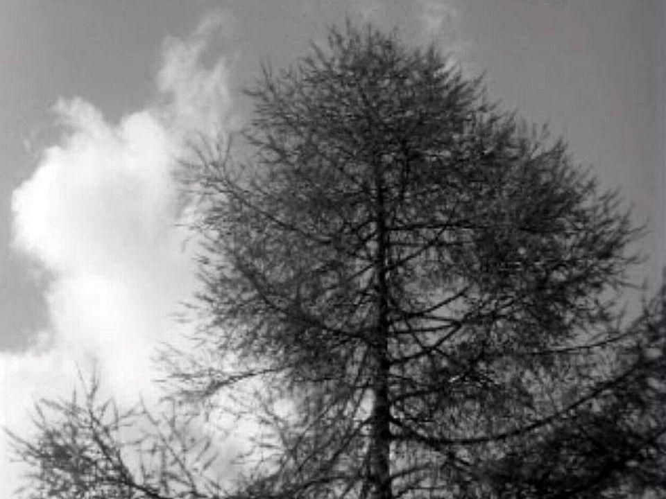 Les arbres de nos forêts sont les gardiens de l'azur.