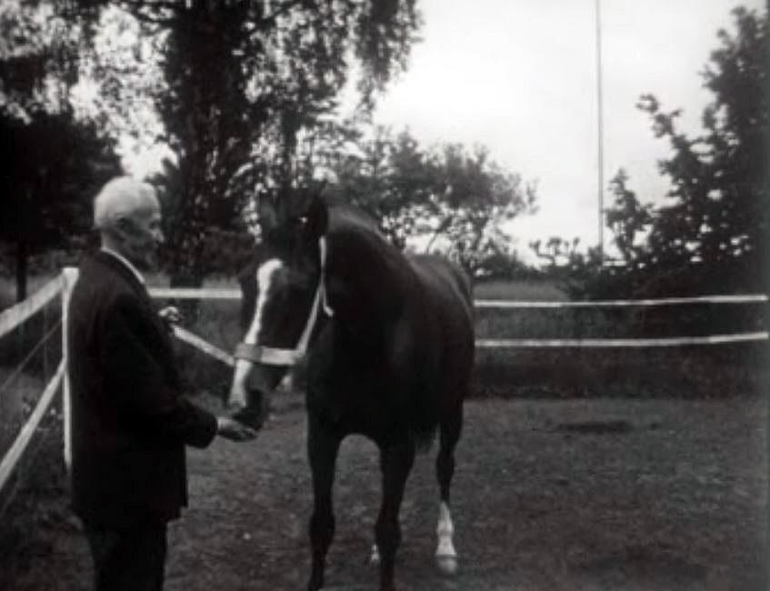 Le cheval du général