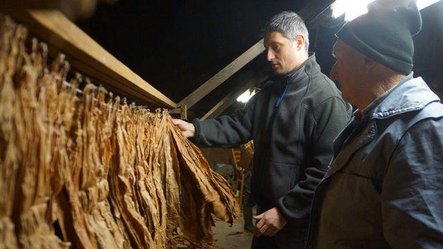 Fabrice et Georges Bersier, producteurs de tabac dans la Broye fribourgeoise. [Delphine Gendre (RTS) - RTS]