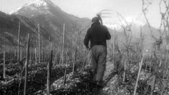 Avec le printemps, le vigneron retourne à sa vigne.