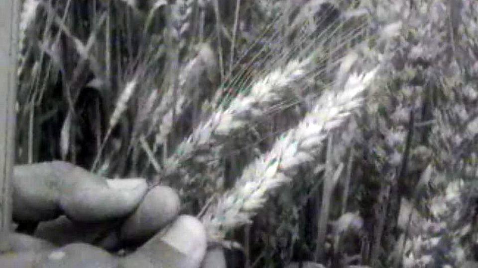 Les produits bio sont-ils vraiment cultivés en Suisse? Enquête.