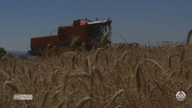 Fribourg devient le cinquième canton latin à interdire l'utilisation d'OGM sur son territoire [RTS]