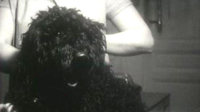 Toilettage pour chien, 1963. [RTS]