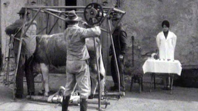 Des diplômés en pédicure bovine en pleine action dans un village vaudois.