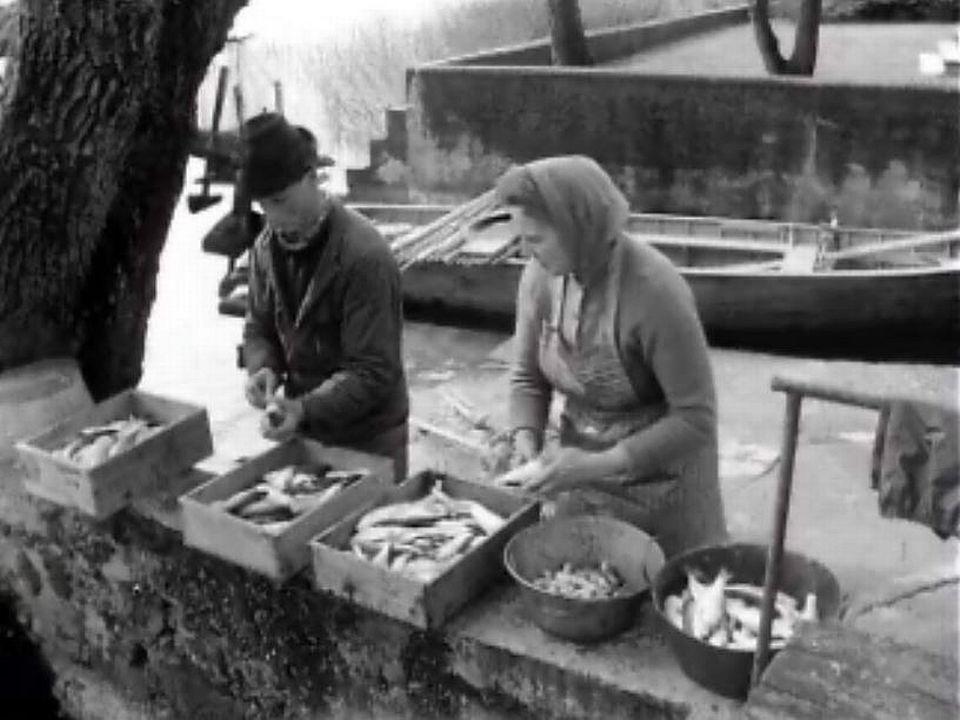 Reportage sur le métier de pêcheur et ses perspectives d'avenir.