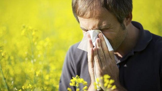 Les allergies aux pollens touchent de très nombreuses personnes en Suisse.  Lichtmeister Fotolia [Lichtmeister - Fotolia]