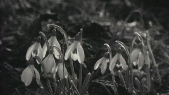 Les premiers signes du printemps. [RTS]