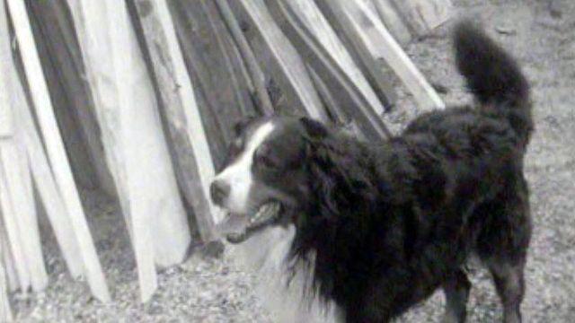 Conseils utiles pour bien choisir son chien de garde.
